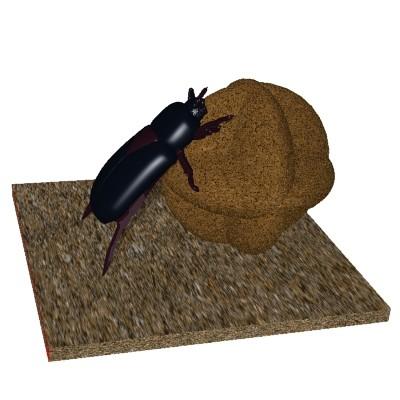 insecte_019.jpg